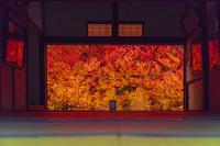 兵庫県 安国寺のドウダンツツジのライトアップ