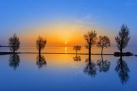 滋賀県 水田と琵琶湖の朝日