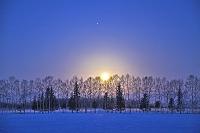 北海道 早朝の月光と並木 帯広市
