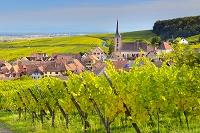 フランス アルザス ブドウ畑