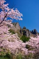 群馬県 妙義山桜の里
