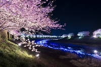 みなみの桜のライトアップ 夜桜 流れ星