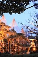 石川県 金沢市 兼六園 雪吊り ライトアップ