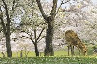 奈良公園と鹿 奈良県