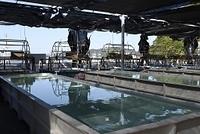 姫路市 坊勢島漁港の養殖所