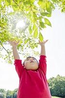 公園で木の枝に手を上げる日本人の男の子