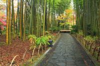 静岡県 修善寺温泉竹林の小径