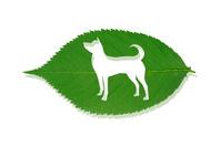 犬の形の虫食い穴のある葉っぱ