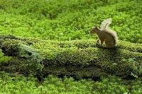 倒木とニホンリス