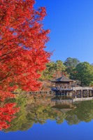 奈良県 紅葉の鷺池と浮御堂朝景 奈良公園