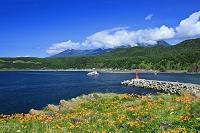 北海道 夏の知床