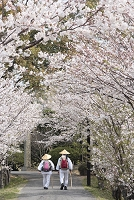 愛媛県 四国霊場第54番 延命寺 桜並木を歩くお遍路さん