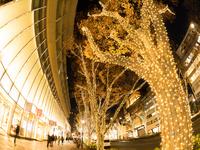 東京都 表参道のイルミネーション