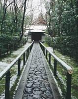 京都府 高桐院参道の雪