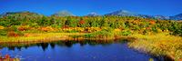 青森県 紅葉の睡蓮沼