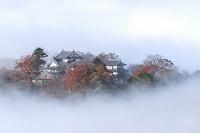 岡山県 雲海に浮かぶ備中松山城