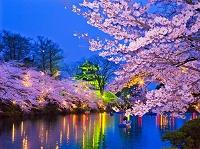 上越市 高田城と夜桜