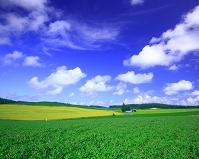 北海道 ジャガイモ畑