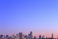 東京都 新宿高層ビル群と朝焼け空