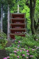奈良県 石楠花咲く室生寺 五重塔(国宝)