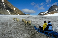 北極 犬ぞり