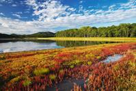北海道 サロマ湖 サンゴ岬のサンゴ草