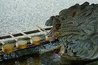 福井県 劔神社 手水舎の龍口