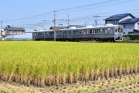 大阪府 水間鉄道 色づいた田園地帯を走る1000系普通電車 後追い