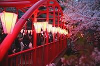 東京都 目黒川の夜桜