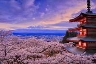 日本 山梨県 桜の新倉山浅間公園