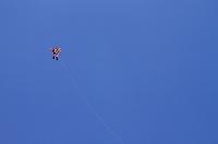 神奈川県 相模の大凧まつり
