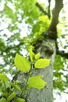 木の幹から芽吹く新芽