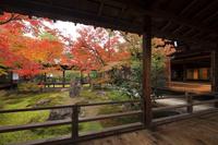 京都府 建仁寺 潮音庭の紅葉と大書院