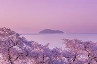 日本 滋賀県 海津大崎の桜と朝焼け