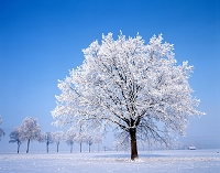 スイス 雪景色