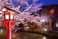京都府 祇園白川の桜