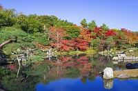 京都 天龍寺 紅葉