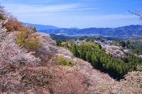 奈良県 シロヤマザクラ咲く吉野山上千本から金峯山寺 蔵王堂