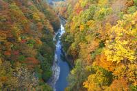 秋田県 子安峡の紅葉