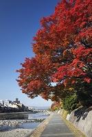 京都府 鴨川と遊歩道
