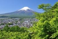 山梨県 初夏の新倉山浅間公園より富士山
