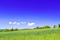 北海道 緑の草原