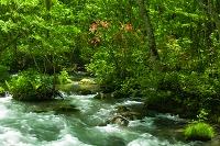 青森県 木漏れ日の奥入瀬渓流 三乱の流れ