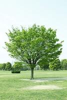 公園の新緑の木々