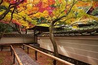 京都府 紅葉の高桐院