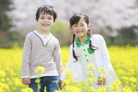 菜の花畑で笑う子供