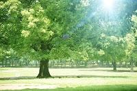 木漏れ日の射す公園