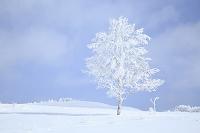 長野県 霧ケ峰高原の雪景色
