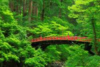 山形県 鶴岡市 羽黒山・祓川と神橋