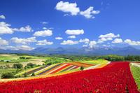 北海道 四季彩の丘と十勝岳連峰と秋